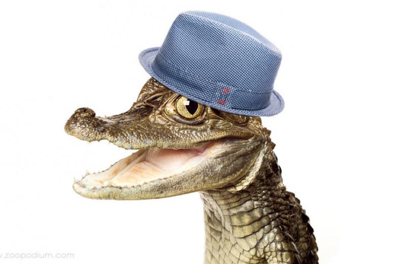 Картинка прикол крокодил
