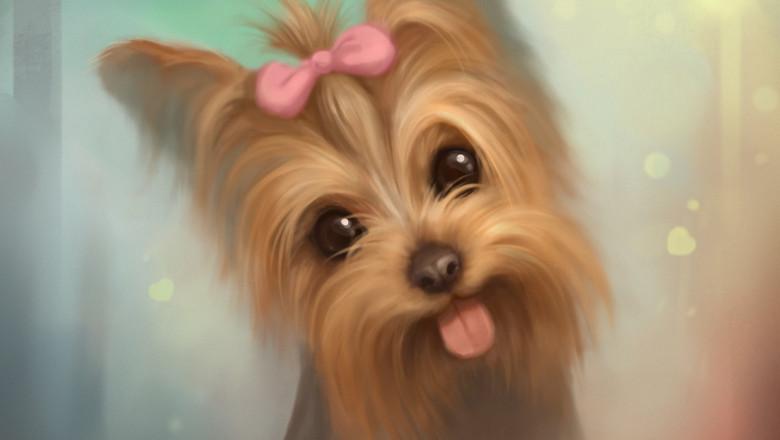 Рисунок собаки йоркширский терьер